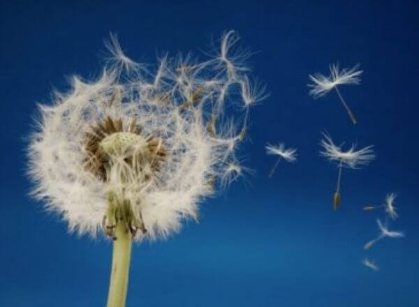 kaj-je-moja-izbira-danes-dotik-lahkotnosti